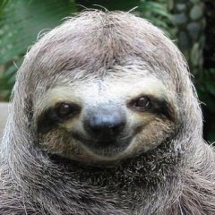 danceswithsloths